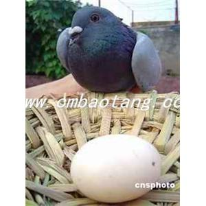 百合柿饼鸽蛋汤