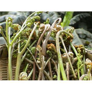 滑炒里脊丝蕨菜