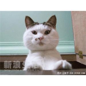 大枣蹄花烧海参