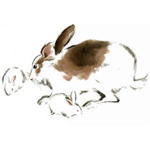 五香糖熏兔肉