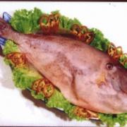 绿鳍马面豚